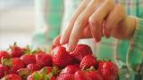 Co jeść w czerwcu? Ceny owoców i warzyw, na które jest sezon, będą spadały. Jedz pysznie, zdrowo i sezonowo