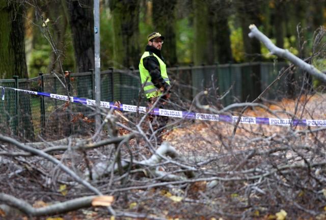 Pod powalonym drzewem zginęła 34-letnia kobieta