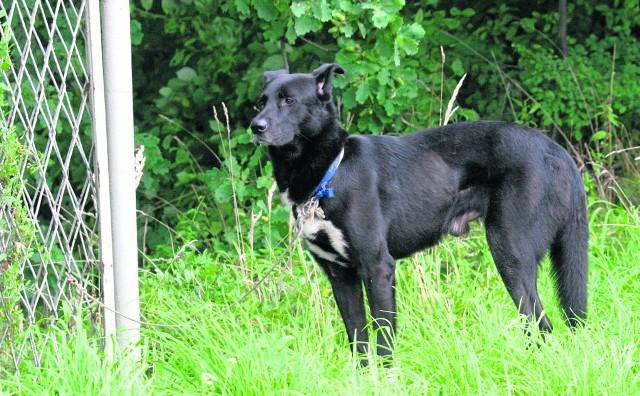 Zostawione psy, przywiązane do płota lub drzewa, to niestety coraz częstszy widok w powiecie