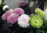 Stroiki na Wszystkich Świętych. Ceny chryzantem 2018. Ich odmian jest wiele. To tradycyjne kwiaty kojarzące się ze świętem zmarłych