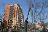 Dąbrowa Górnicza: w mieście ma zniknąć prawie tysiąc drzew, w zamian posadzą 330 nowych