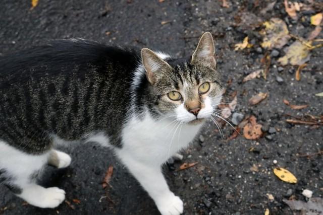 Na Wyspach potwierdzono dwa przypadki przeniesienia koronawirusa SARS-CoV-2 z ludzi na koty domowe.