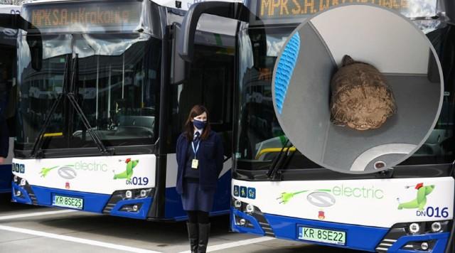 Prowadzący miejskie autobusy nieraz są świadkami nietypowych zdarzeń