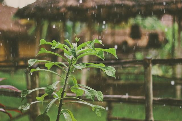 Nawet 5 tys. zł będzie można dostać z kasy ratusza na budowę systemu do zatrzymywania wody deszczowej