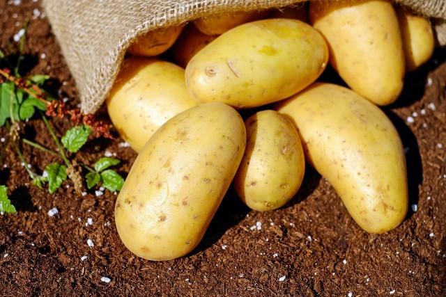 Kliknijcie w galerię i zobaczcie przepisy naszych Czytelników na dania z ziemniakiem w roli głównej.