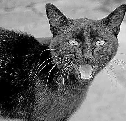 Według starych przesądów, aby położnica wyzdrowiała, trzeba zabić czarnego kota