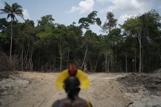 Wycinanie lasów deszczowych Amazonii zmusza także rdzenne plemiona do opuszczania ich siedzib