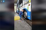 #Hot16Challenge2. Gdyńskie Przedsiębiorstwo Komunikacji Autobusowej rapuje w walce z koronawirusem. W roli głównej dzieci pracowników