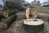 Wodzisław Śl.: Były drzewa, zostały pnie. W Parku Miejskim wycięto kilkadziesiąt drzew! Zobaczcie ZDJĘCIA