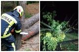 Burze w Podlaskiem. Wiatr łamał drzewa i zrywał linie energetyczne. Strażacy interweniowali ponad 70 razy [ZDJĘCIA]