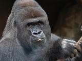 Koronawirus zagrożeniem dla 410 gatunków zwierząt! Wyniki analizy genetycznej wskazaniem dla ochrony wielu zwierząt dzikich i hodowlanych