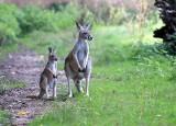 W łódzkim zoo urodził się jeleń podobny do myszy! Wiosenne narodziny w łódzkim zoo. ZDJĘCIA