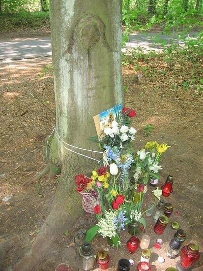 Ci, którzy wierzą, że na drzewie pojawił się wizerunek Matki Boskiej, stawiają pod nim kwiaty i znicze.
