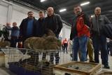 Rekordowa wystawa gołębi i królików w Targach Kielce. Niektóre rasy zadziwiały (ZDJĘCIA)