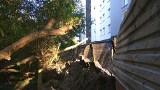 Białystok. Deweloper przyciął drzewa w parku Antoniuk. Władze miasta uspokajają, że wszystko odbyło się jednak zgodnie z prawem