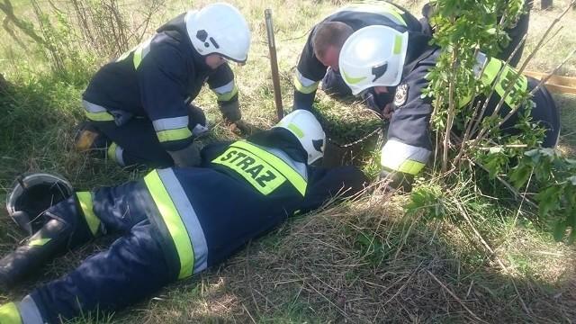 W wielkanocną niedzielę strażacy ochotnicy z Duńkowic k. Jarosławia zostali zadysponowani do nietypowego zdarzenia.W okolicach tamy na rzecze Wisznia w miejscowości Nienowice, do głębokiej na 1,5 m studni wpadł bóbr. Strażacy użyli liny i podręcznego sprzętu. Bóbr został owinięty w koc, a następnie wypuszczony do pobliskiego zbiornika wodnego.