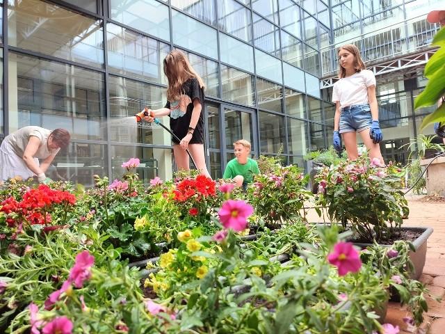 """Sadzenie roślin zielonych i kwitnących w bibliotecznym patio przez harcerzy drużyny """"Szekle"""""""