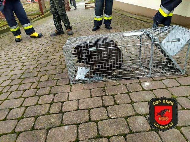 Kobietę przewieziono do szpitala, a zwierzę zabrały odpowiedni służby