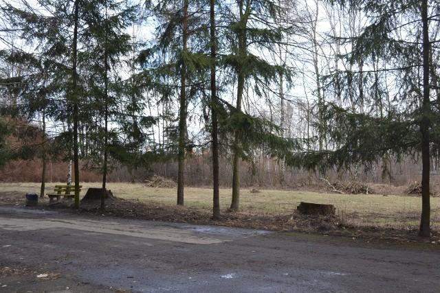 W Parku Kuronia wycięto 49 drzew. W zamian posadzone zostanie 80 innych. W całym Sosnowcu zasadzonych zostaną setki nowych drzew oraz krzewów. Zobacz kolejne zdjęcia. Przesuń zdjęcia w prawo - wciśnij strzałkę lub przycisk NASTĘPNE