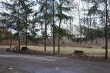 Sosnowiec. Nasadzą setki nowych drzew i krzewów. Będą także nowe drzewa w Parku Kuronia za wycinkę w tym miejscu