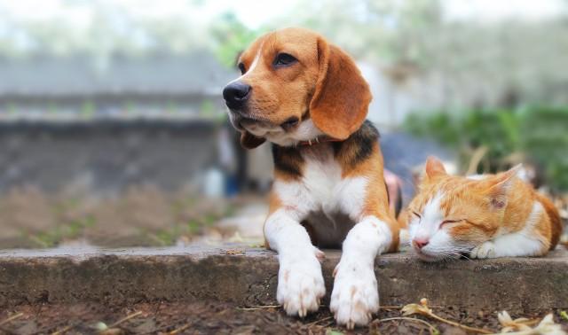 Decyzja o wprowadzeniu do naszego domu zwierzaka - pierwszego czworonożnego domownika, kolejnego, psa czy kota - sprowadza na nas ogromną odpowiedzialność. Pewne naturalne predyspozycje i cechy charakteru nie zwalniają świadomego opiekuna z pracy ze zwierzęciem i odpowiadania na jego potrzeby.