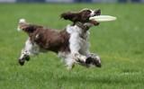 Latające psy we Wrocławiu. Zawody w parku Południowym