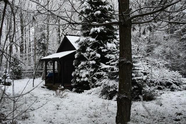 W nocy z sobotę na niedzielę Świętokrzyskie zostało pokryte śniegiem. Uroczo w zimowej scenerii prezentują się między innymi okolice Masłowa - nasz czytelnik przysłał sporo zdjęć. Wiele zdjęć dostaliśmy też z innych miejsc w regionie. Jeśli macie za oknem podobne widoki przysyłajcie nam zdjęcia na adres mailowy internet@echodnia.eu oraz w wiadomościach na Facebooku.Zobaczcie galerię białego krajobrazu w Świętokrzyskiem na kolejnych slajdach>>>