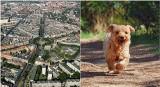 Które osiedla w Szczecinie są najbardziej przyjazne zwierzętom? Zobacz ranking