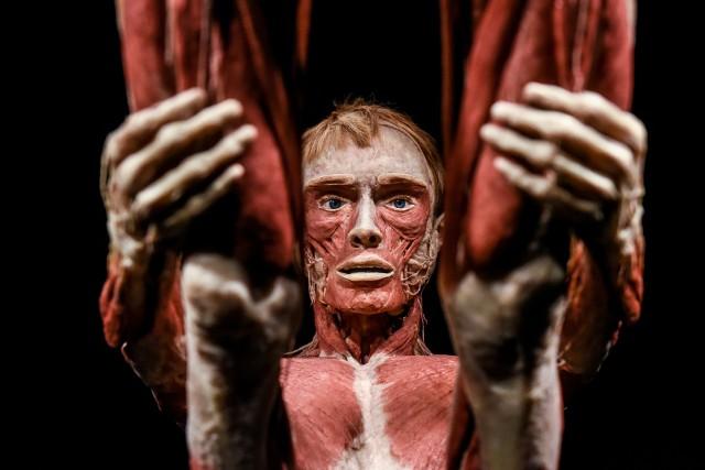 """Wystawę """"Body Worlds Vital""""  możemy oglądać w Galerii Pestka w Poznaniu jeszcze do niedzieli"""