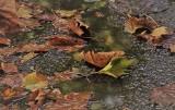 Pogoda na dziś: Wtorek, 29 października. Sprawdź pogodę dla Poznania i Wielkopolski [Poznań, Leszno, Kalisz, Konin, Gniezno, Piła]