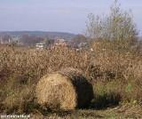 Rolnicy mogą składać wnioski o dopłaty z Unii Europejskiej
