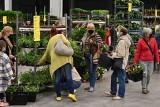 Festiwal Roślin w Targach Kielce! Zobaczcie, jakie rośliny można kupić (ZDJĘCIA)