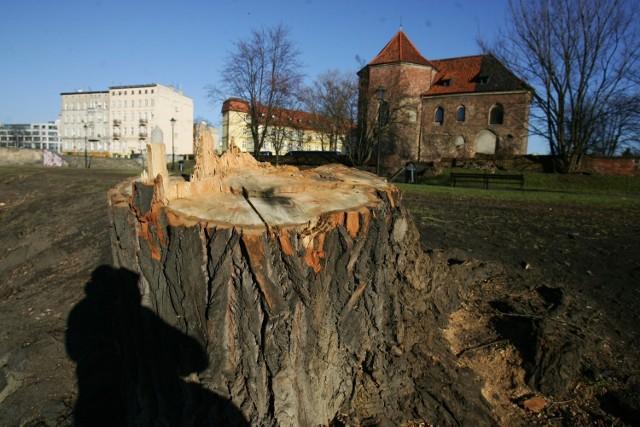 30 tysięcy drzew w trzy lata! Na takę skalę wycinki zezwolił magistrat na terenie Wrocławia od 2012 roku