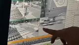 Wypadek karetki w Puszczykowie: Opublikowano nagranie z monitoringu! Widać moment zmiażdżenia karetki [WIDEO]