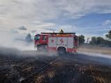 Duży pożar na polu w Grzybnie. Walka z żywiołem [zdjęcia, wideo]