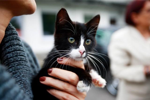 W polskich schroniskach żuje ponad 100 tysięcy bezdomnych zwierząt. Szacuje się również, że  bezdomnych psów i kotów może być nawet 3 miliony.