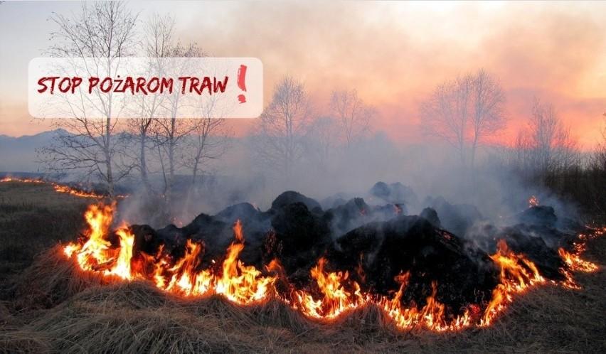 Znów płoną trawy, dochodzi do pożarów. To błąd, za który grożą kary i utrata dopłat