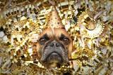 Twój pies boi się fajerwerków? Te sposoby mogą mu pomóc! Jak przygotować się na sylwestra z psem? ZOBACZ GALERIĘ