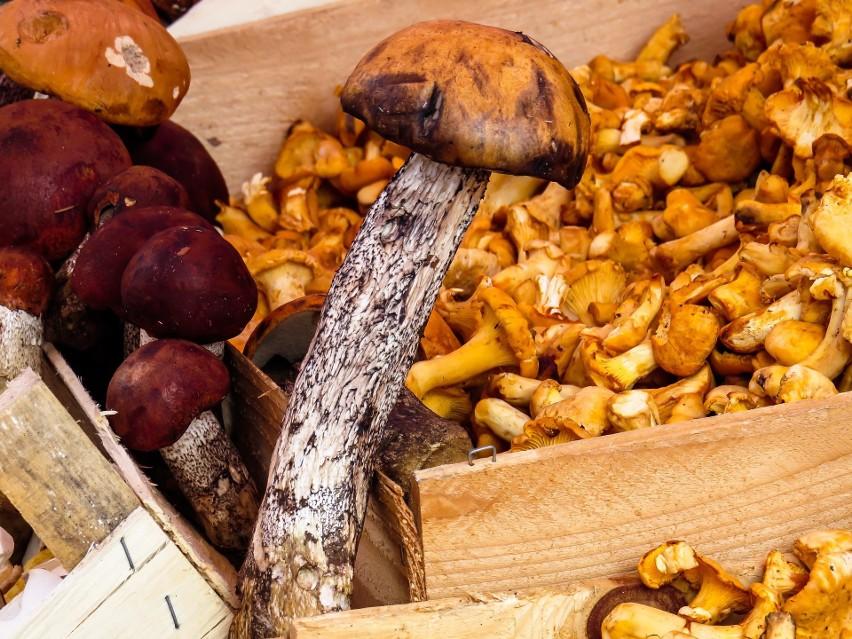 Pierwszą czynnością przygotowującą grzyby do spożycia lub...