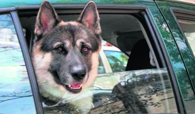 Wiele osób traktuje psa jak członka rodziny i na urlop zabiera go ze sobą