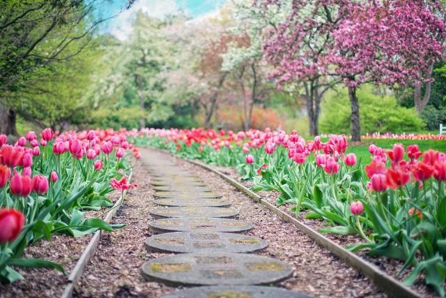 Wiosna zbliża się wielkimi krokami