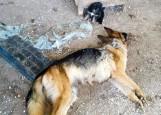 Sokółka. Właścicielka hodowli psów z Igrył stanie przed sądem