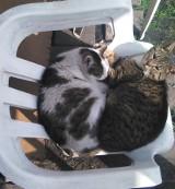 W Strzelnie zakazali karmić bezpańskie koty. Zakaz obowiązuje jednak tylko w szpitalu