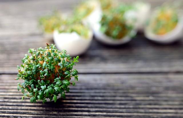 Zdradzamy, jakie właściwości kryją się w skorupkach jaj i jak je wykorzystać w domu, w ogrodzie i przy pielęgnacji skóry oraz paznokci!