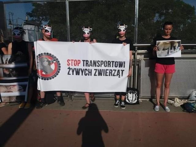 Akcja uliczna #StopLiveTransport - STOP długodystansowemu transportowi żywych zwierząt odbywa się co roku od pięciu lat. W 2021 roku w Poznaniu aktywiści fundacji Viva zapraszają na protest o godzinie 19 na placu Wolności. Fundacja organizuje też wiele innych protestów, m.in. ten przeciw produkcji kaszmiru