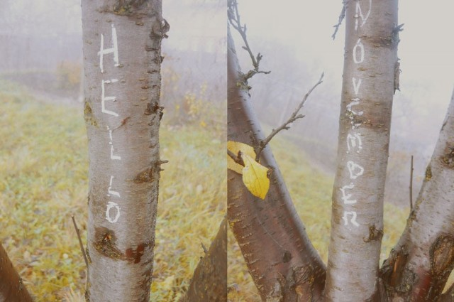 Witaj listopadzie. Ponury, mglisty listopadzie.