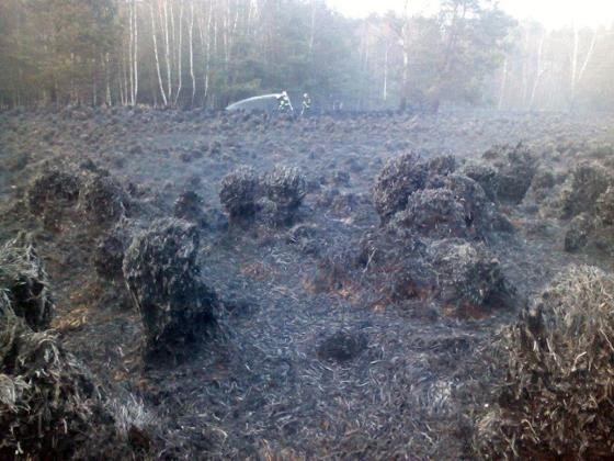 Podpala lasy pod Raciborzem, a sucho jak przed pożarem w Kuźni Raciborskiej w 1992