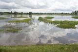 IMGW wydał kolejne ostrzeżenie dla Wielkopolski. Tym razem dotyczy ono gwałtownych wzrostów stanów wód
