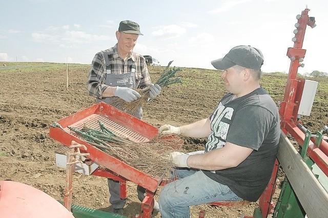 Ruszyły prace w winnicy w ZaborzeRoman Grad wspólnie z Mariuszem Durką pracują przy nasadzeniu winorośli. Tej wiosny winnica w Zaborze będzie liczyć już przeszło 100 tys. krzewów.