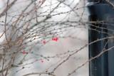 Synoptycy: Za tydzień wiosna, będzie 15 stopni Celsjusza! Czy śnieg i mrozy jeszcze wrócą?